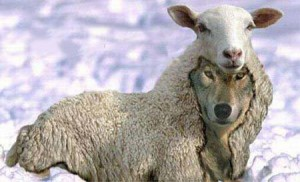 wolf_sheep